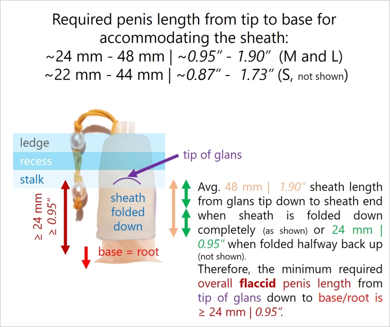 Minimum penis length for a foreGestalt companion to work well